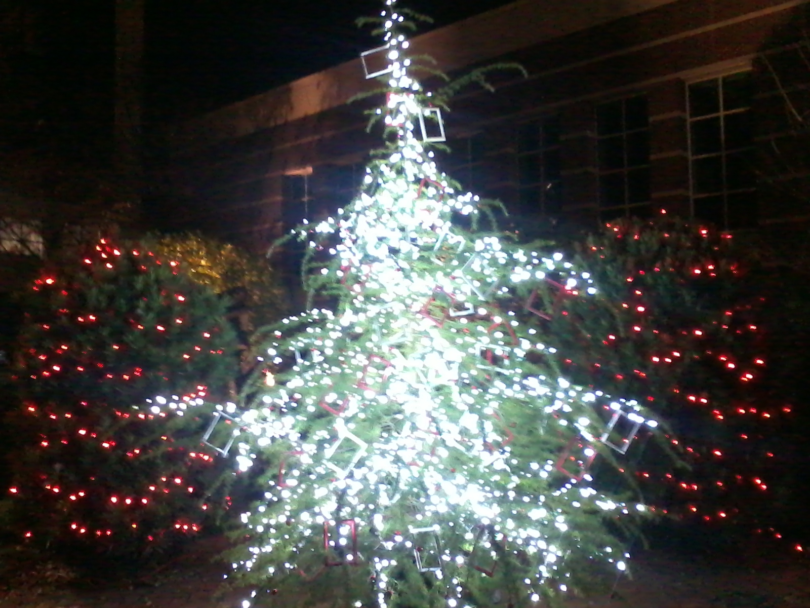 Cor Columbia Tree Lighting